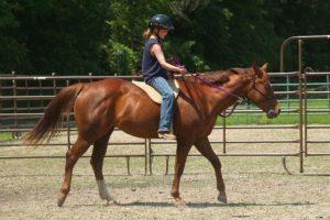 horse riding rodos, horse riding rhodes, rent a horse, horse lessons rhodes, horse lessons rodos